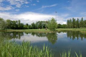 Bild mit Blick auf den Teich, umgeben von Grünflächen, im Hintergrund spielen zwei Golfer.